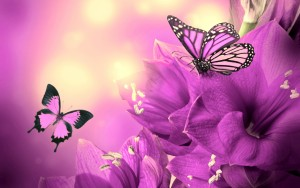 purple-flowers-butterflies-wide