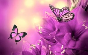 purple-flowers-butterflies-wide